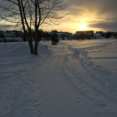 Early morning winter golf on the groomer course.
