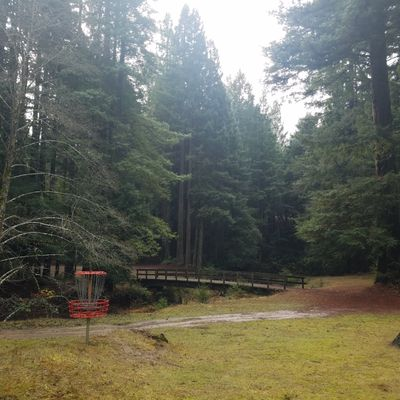 Hole 14: Just a basket on a little hill, surrounded by beautiful redwoods.