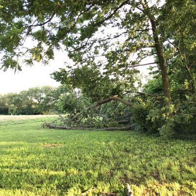 Hole 10, Current as of 6/16/21: Tress fallen down that block basket behind them