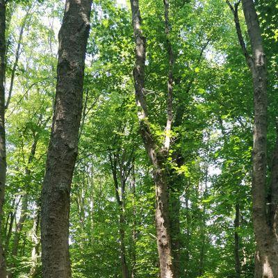 Überwiegend auf Wiesen im Park, aber auch schöne Waldstrecken dabei