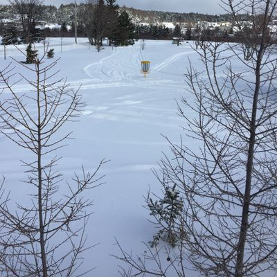 Groomed after the storm while mild. Packed like a road now, good waking.