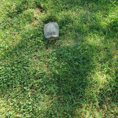 Look out for the turtle on hole 5