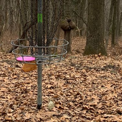 What's up with the tree here at hole 12?  You come be the judge