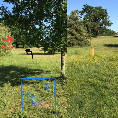 Hole 6 - mando right of group of trees