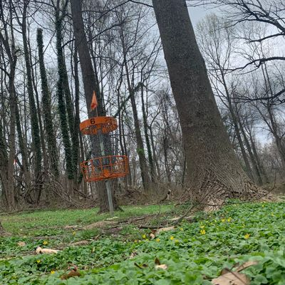 6 orange/long tee