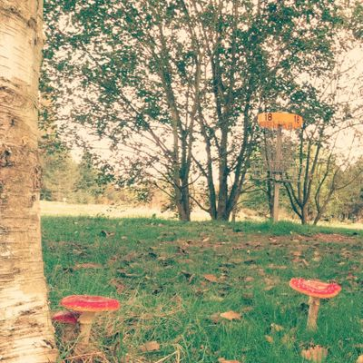 Fly Agarics on the 18th green.