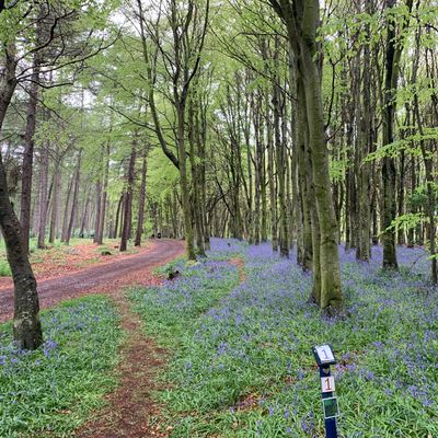 Reboot's famous 'bluebell woods'