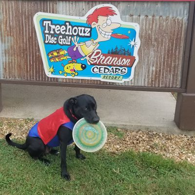 Diskey The Wonder Dog Hero Disc Pro, and Course Mascot.