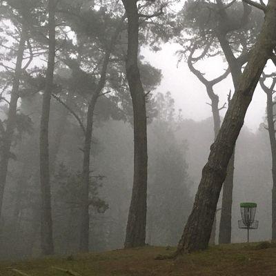 15a in morning fog
