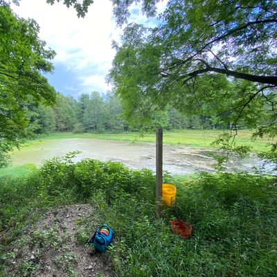 View from 3 tee long. Lots of water August 2020