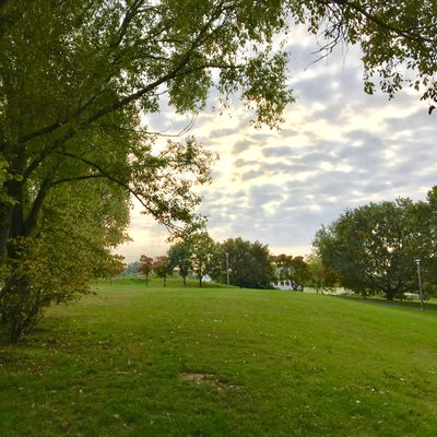 Open grassy park.