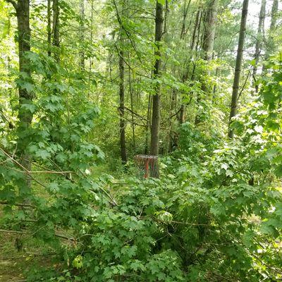 Downed tree blocking basket on 15.